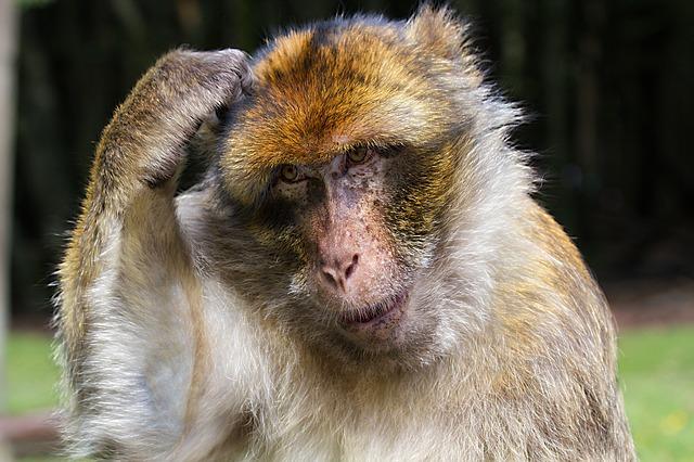 לחשוב לפני שמתנהגים כמו קופים