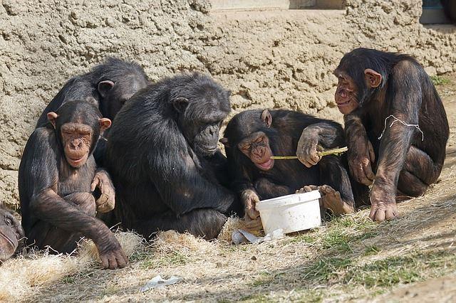 מבקרים בגן החיות